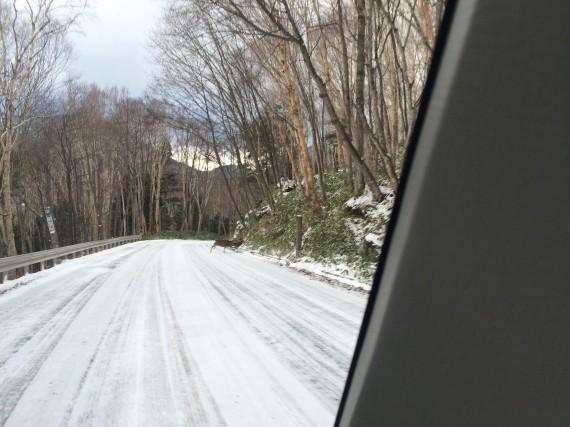 19金精峠の下りで鹿の群れに遭遇