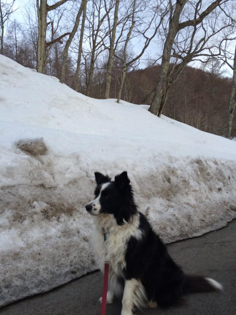 和田峠には雪が