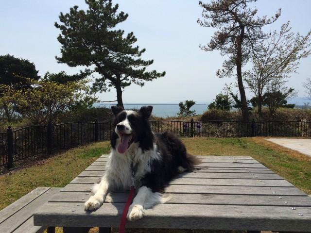 三崎公園から海を望む